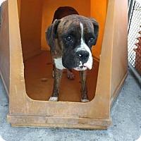 Adopt A Pet :: da Vinci - San Pedro, CA
