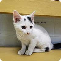Adopt A Pet :: Lydia - Elyria, OH