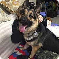 Adopt A Pet :: Gobi - Las Vegas, NV