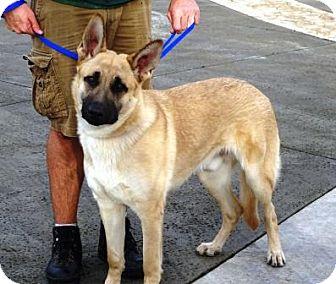Dog Training Lathrop Ca
