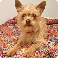 Adopt A Pet :: Mango - Santa Ana, CA