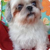 Adopt A Pet :: Suzie - Crump, TN