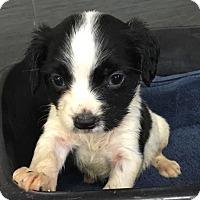 Adopt A Pet :: Lilly - Long Beach, NY