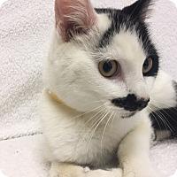 Adopt A Pet :: Tom Selleck - Mission Viejo, CA