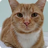 Adopt A Pet :: Reuben - Austintown, OH