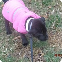 Adopt A Pet :: Princess - Currently in foster - Roanoke, VA