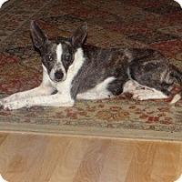 Adopt A Pet :: Lexi - Marlton, NJ