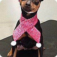 Adopt A Pet :: Mandy - South Gate, CA