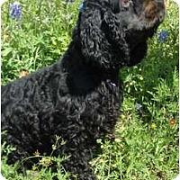 Adopt A Pet :: Jackson - Sugarland, TX