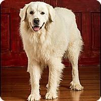 Adopt A Pet :: Buddy - Owensboro, KY