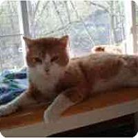 Adopt A Pet :: Jerry - Hamburg, NY