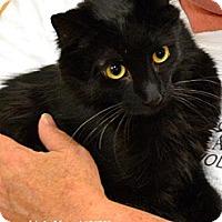 Adopt A Pet :: LITTLE MAN - Sacramento, CA