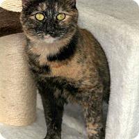 Adopt A Pet :: Wanda - St Louis, MO