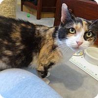 Adopt A Pet :: Charlotte-Adoption Pending! - Colmar, PA