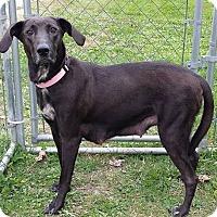 Adopt A Pet :: Abby - Elyria, OH