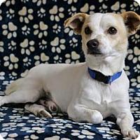 Adopt A Pet :: Nibbler - Yucaipa, CA