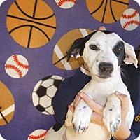 Adopt A Pet :: Maya - Oviedo, FL