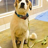Adopt A Pet :: RALPHIE - Poteau, OK
