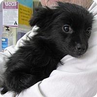 Adopt A Pet :: Fancy - Erwin, TN