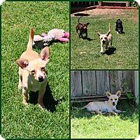 Adopt A Pet :: Newton - Yuba City, CA