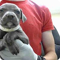 Adopt A Pet :: A275092 - Conroe, TX