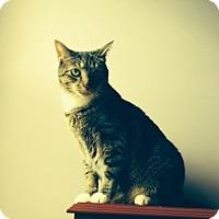 Adopt A Pet :: Thunder - Stafford, VA