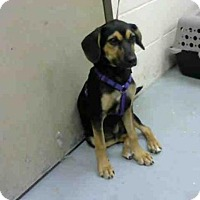 Adopt A Pet :: SOCCER - Conroe, TX