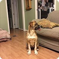 Adopt A Pet :: Patrerson - Waynesboro, TN