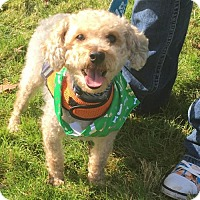 Adopt A Pet :: Grizmo - Princeton, MN