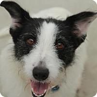 Adopt A Pet :: Caroline - E. Brookfield, MA