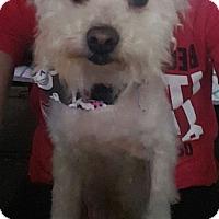 Adopt A Pet :: Maple - Troy, MI