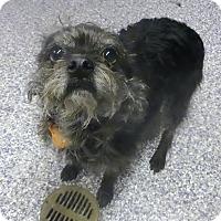 Adopt A Pet :: Harpo - Westfield, NY