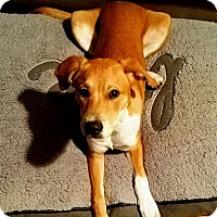 Adopt A Pet :: Conner - Houston, TX