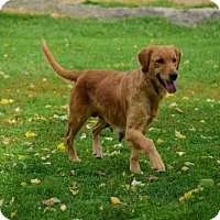 Adopt A Pet :: SANDY OR SAMANTHA - WOODSFIELD, OH