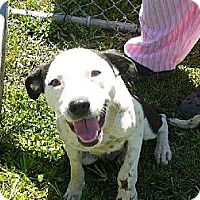 Adopt A Pet :: April (Levein) - Slidell, LA