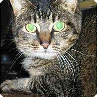 Adopt A Pet :: Guadalupe - Summerville, SC