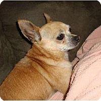 Adopt A Pet :: Gyro - Leesport, PA