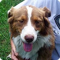 Adopt A Pet :: Ally - Blooming Prairie, MN