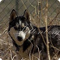 Adopt A Pet :: Maxx - Golden, CO