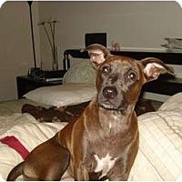 Adopt A Pet :: Trisha -In CT! - Adamsville, TN