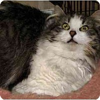 Adopt A Pet :: Bree - Davis, CA