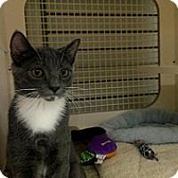 Adopt A Pet :: Bubblegum - Stafford, VA