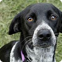 Adopt A Pet :: Carrie - Austin, TX