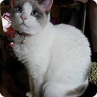 Adopt A Pet :: Kim - St. Cloud, FL