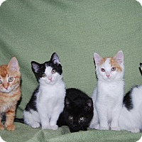 Adopt A Pet :: Holly, Jolly, Berry - Ridgway, CO