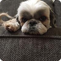 Adopt A Pet :: Hazelnut - Fullerton, CA