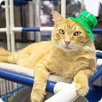 Adopt A Pet :: Fred-D - Montclair, CA