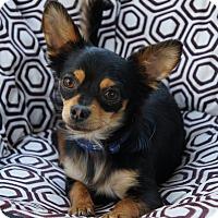 Adopt A Pet :: Calhoun - Los Alamitos, CA