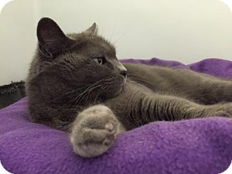 Domestic Shorthair Cat for adoption in Ashland, Massachusetts - Winnie (2)