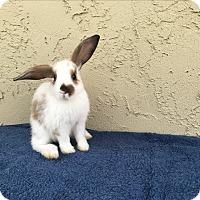 Adopt A Pet :: Alvin - Bonita, CA